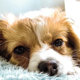 Sleepy Puppy by Michael de Laborde - Animals - Dogs Portraits ( nature, puppy, sleep, dog, portrait )