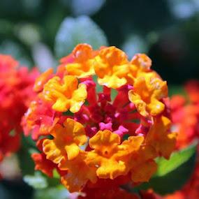 Blood orange by Zach Church - Nature Up Close Flowers - 2011-2013