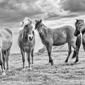 by Oddsteinn Björnsson - Black & White Animals (  )