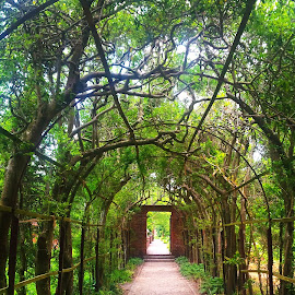 Walkway to the Garden by Janssel Carvi Hoye - Nature Up Close Gardens & Produce