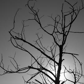 Дърво by Georgi Kolev - Black & White Objects & Still Life ( небе., слънце., дърво., ден., време. )