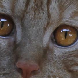 Garfunkle !!! by Frank Gualtieri - Animals - Cats Portraits (  )