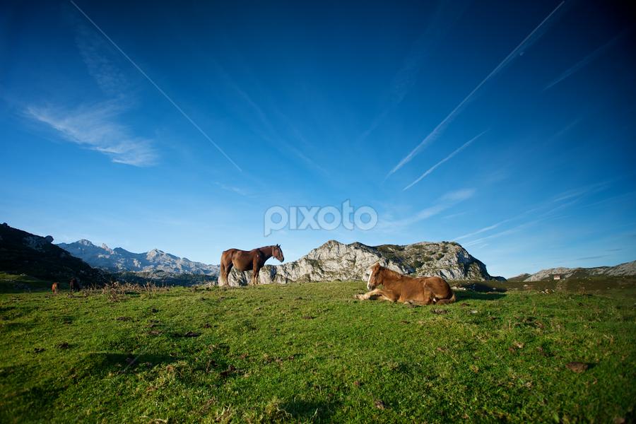 Asturian Horses  by Benjamin Arthur - Animals Horses ( picos de europa, asturias, photographer, benjaminarthur.com, amsterdam, north, landscape, prague, spain )