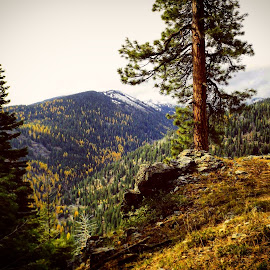 Fall in the mountains by D.j. Nichols - Instagram & Mobile Android ( fall in mountains )