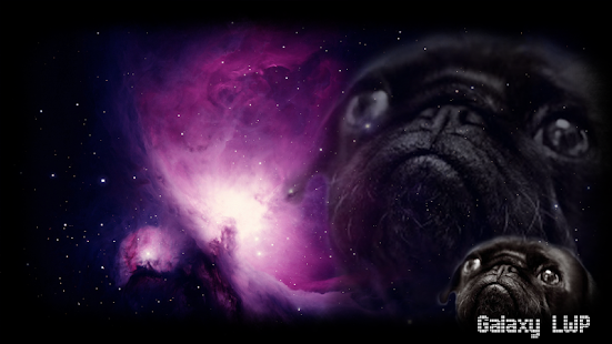 Pug Wallpaper - screenshot