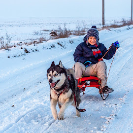Sledge time by Adrian Pruteanu - Animals - Dogs Running ( winter, family, snow, husky, sledge, kids,  )