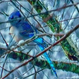 Blue Jay's Winter by Gia Gee - Digital Art Things ( virtual blue jay's winter, virtual winter, blue jay's winter, blue jay, virtual blue jay )