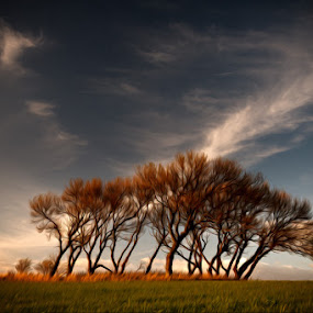 Trees in the Wind by Pete Barnes - Landscapes Prairies, Meadows & Fields ( landscape photographer, fine art, landscape, photography, drawing, sun, colour, sky, whisp, photographer, bunch, evening, clouds, wind, art, horizon, skies, lean, savannah, lepton, sunset, trees, scene, landscape photography, group )