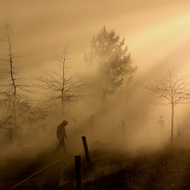 aftermath by Vitor Guimarães - Landscapes Forests ( victor guimarães, color, aftermath, forest, burn )