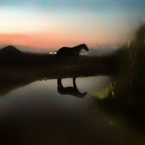 Watering hole guardian by Jeannie Matteson - Animals Horses