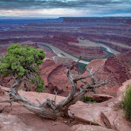 Deadhorse Point by Matt Downing - Landscapes Sunsets & Sunrises ( water, clouds, moab, winding, america, dead horse point, canyon, morning, landscape, usa, overlook, tree, utah, canyonlands, colarado river, vista, southwest, sunrise, rocks, river, www.matthewdowningphotography.com )