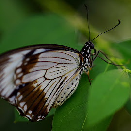 close up by Gjunior Photographer - Animals Insects & Spiders ( butterfly, macro, nature )