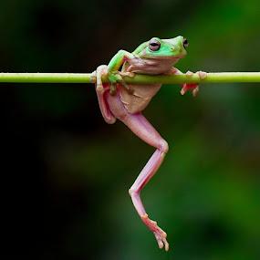 Slip.... by Vincent Sinaga - Animals Amphibians
