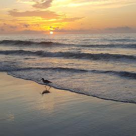Ocean City , Md. by Charlotte Burnett - Landscapes Beaches