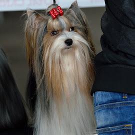 by Vladymyr Sergeev - Animals - Dogs Portraits