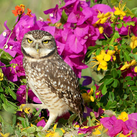 OWL PORTRAIT! by Itamar Campos - Animals Birds