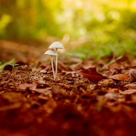 Always With You by Sianak Desa - Nature Up Close Mushrooms & Fungi