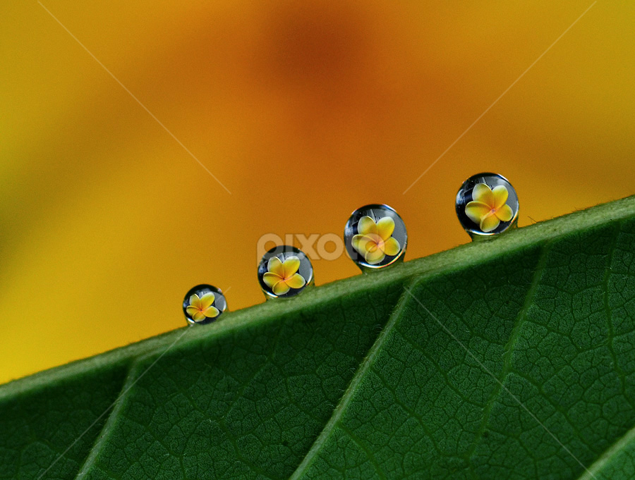 by Lazuardi Normansah - Abstract Water Drops & Splashes