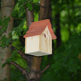 My new bird house taken with my new camera!  the pictures are so pretty! by Cheri Shepherd - Novices Only Landscapes