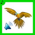 Free 50 Amazing Bird Sounds APK for Windows 8