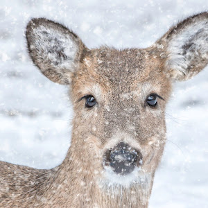 Sue Matsunaga Deer in Snow.jpg