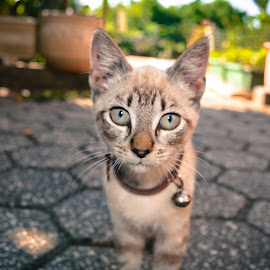 Tinker bell by Andreia Mendes - Animals - Cats Portraits ( kitten, cat, meow, outdoors, photography )