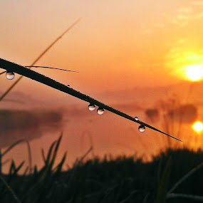 water dropes at time of sunrise by Jyubil Chaudhari - Instagram & Mobile Android ( landscape & nature, weather )