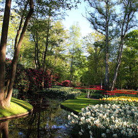 Most beautiful garden of Europe  by Stephanie Veronique - City,  Street & Park  City Parks ( flowers, tulips, reflection, nature, garden, trees, water, landscape )