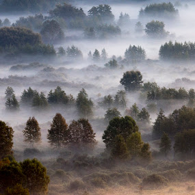 Trees in the morning mist by Pietro Ebner - Landscapes Prairies, Meadows & Fields ( tree, autumn, fog, trees, morning, mist,  )