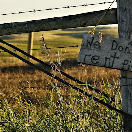 Well, Dammit by Tim Day - Landscapes Prairies, Meadows & Fields ( signs, saskatchewan, pigs, gates, fields )