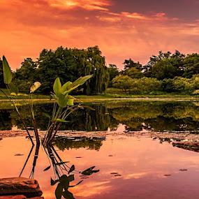 Before Sunset by Gene Brumer - Landscapes Sunsets & Sunrises ( wster, tree, sunset, leaf, sunrise, pond, sun )