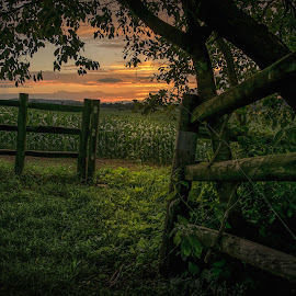 by Barry Mills - Landscapes Prairies, Meadows & Fields ( fence, peaceful, sunset, farmland, solitude, nikon, country )