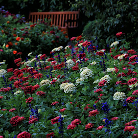Seat in the Garden by Susan Marshall - Flowers Flower Gardens (  )