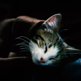 Kitty by Branko Askovic - Animals - Cats Kittens ( cat, low key, sleeping )