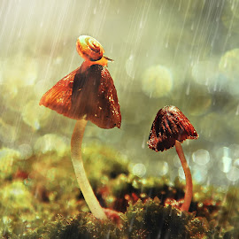 In The Rain by Lay Sulaiman - Nature Up Close Mushrooms & Fungi ( mushroom, macro, macrophotography, fungi, nature )