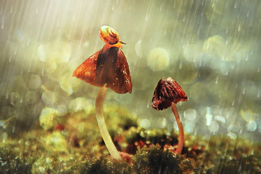 In The Rain by Lay Sulaiman - Nature Up Close Mushrooms & Fungi ( mushroom, macro, macrophotography, fungi, nature,  )