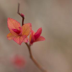 Not_A_Flower.jpg