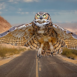 Freedom! by Sandy Scott - Digital Art Animals ( raptor, mountains, leading lines, owl, predator, nature, birds, digital art, birds of prey, road, wings, owl in flight, great horned owl, roadway, animals, wildlife )