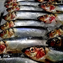 Sardines for sale. by Terry McGeary - Food & Drink Meats & Cheeses ( fish sardine net slab eye death food healthy scale diet oil nutrition )