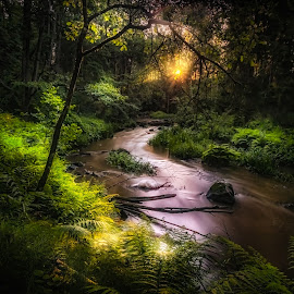 In the jungle by Johan Lennartsson - Landscapes Forests ( jungle, green, creek, forest, sunrise, morning, woods, river )