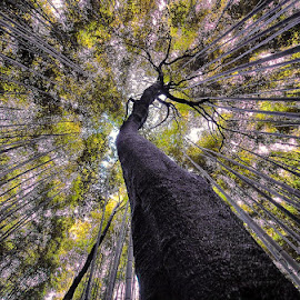 Ultra Wide by Jerry Kambeitz - Landscapes Forests ( wideangle, trees, forest, wide, angle )