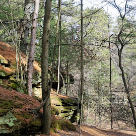 by Kathy Kehl - Landscapes Forests ( rock out cropping, out cropping, rock, rock formation, rocks )