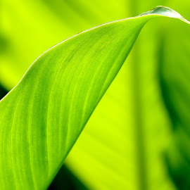 Go Green..!! by Vikrant Sharma - Nature Up Close Leaves & Grasses ( nature, color, bright, green, leaves )