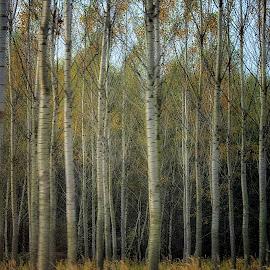 by Manuela Dedić - Nature Up Close Trees & Bushes