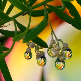 Take your pick of flower fruit by Margie MacPherson - Nature Up Close Natural Waterdrops ( plumeria, water, fern, water drops, macro, maui, nature, maui up close, green, asparagus fern, pink, yellow )