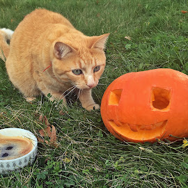 Smell like Halloween by Dobrin Anca - Instagram & Mobile iPhone ( cat, pumpkin, coffee, brittany, halloween )