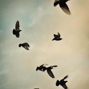 Birds by Josh Hilton - Digital Art Things ( harrogate )