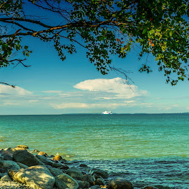 Tree and sea by Maksim Kozlov - Landscapes Waterscapes ( shore, mountain, getaway, relax, solitude, travel, beach, landscape, coastline, escape, panorama, coast, philipines, sky, nature, tree, sunny, idyllic, summertime, tallinn, water, sand, lagoon, pakri, dream, beautiful, sea, traditional, seascape, scenic, relaxation, vacation, turquoise, blue, views, peace, summer, tranquility, scenery, philippines, panoramic )