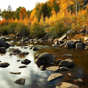 The end nears by Dennis Ducilla - Landscapes Waterscapes ( stream, california, gold, aspens, pwcfallleaves-dq, rocks, ducilla, river )