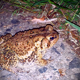 A Toad in the Night by Cecilia Sterling - Instagram & Mobile Other